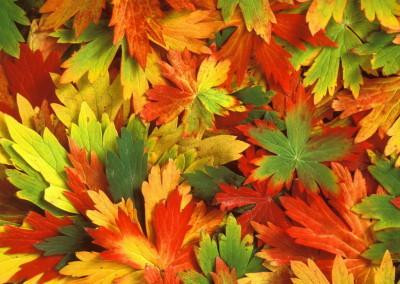 jesen12